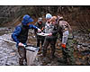 Examine collected stream samples