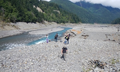 Return of the Plants to the Elwha?