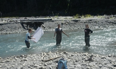 Macroinvertabrates in the Elwha River