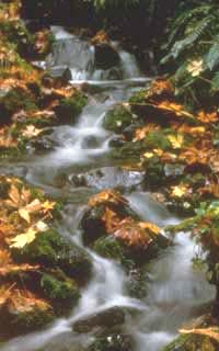 Tributary and autumn leaves