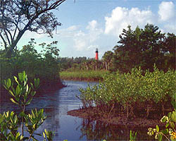 Mangrove wetlands and lighthouse