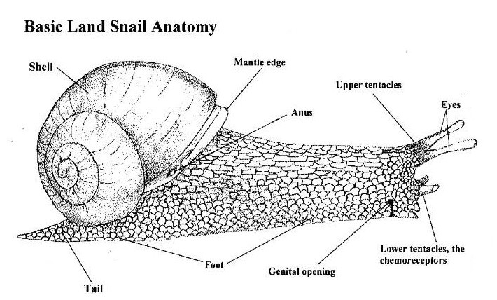 Snail Monitoring - Hands on the Land